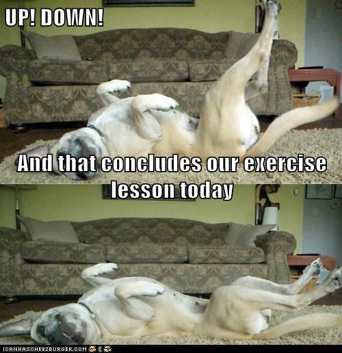 UP! DOWN! And that concludes our exercise lesson today