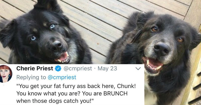 woman tweets about escaped dog