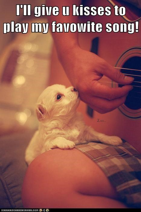 guitar KISS love Music puppy song whatbreed - 5755183872