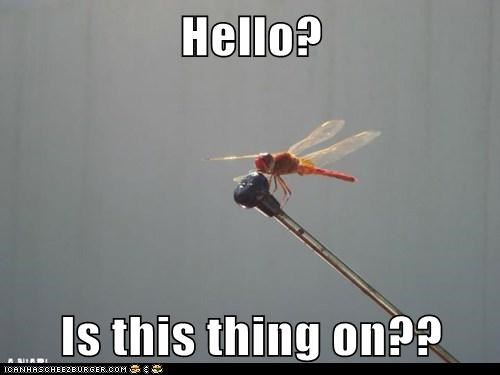dragonfly,is this thing on,mic check,microphone