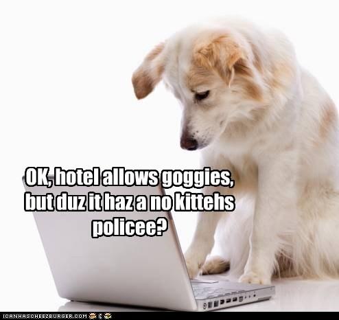 OK, hotel allows goggies, but duz it haz a no kittehs policee?
