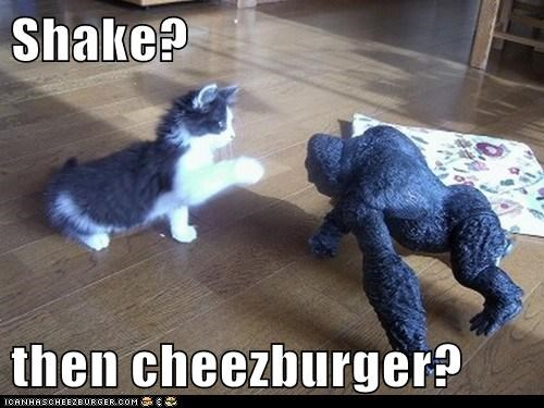 Cheezburger Image 5755886592