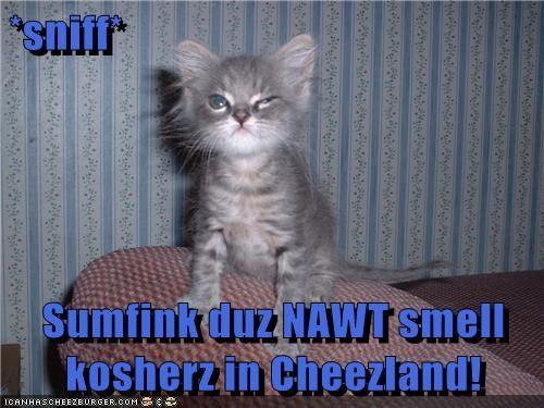 Cheezburger Image 5755931136