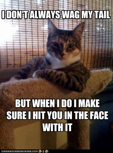 annoying Cats Hall of Fame in your face Memes tails the most interesting cat the most interesting cat in the world the most interesting man in the world wagging - 5755989760
