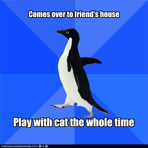 antisocial,Awkward,Cats,friends,penguins,playing,social situations,socially awkward penguin