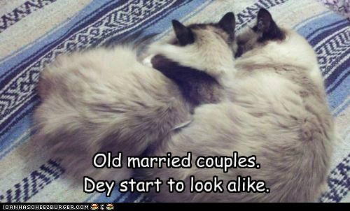 caption,captioned,cat,Cats,couples,look,lookalike,married,old,resemblance,start