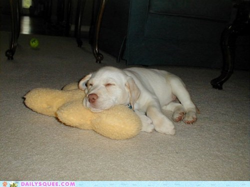 baby labrador puppy reader squees sleeping tiny toy - 5757107968