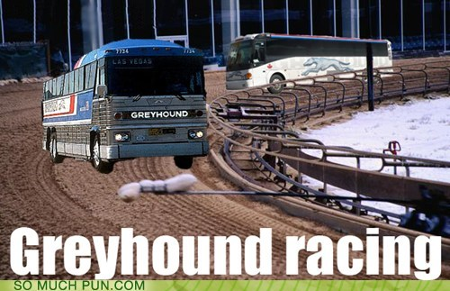 bus,dogs,double meaning,greyhound,Hall of Fame,literalism,racing,shoop