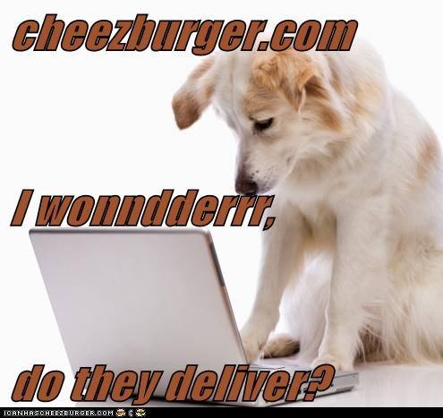 Cheezburger Image 5758255360