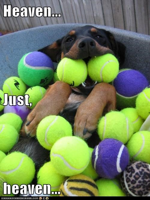 ball balls best of the week doberman Hall of Fame happy dog heaven tennis ball - 5758513664