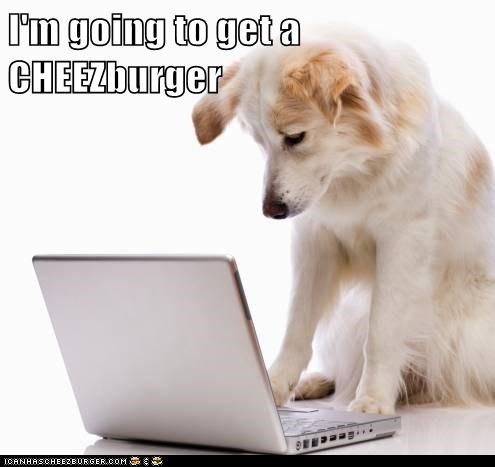 Cheezburger Image 5758771456