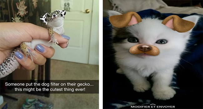 dog filter lizards snapchat filters gifs kitten cute animals cute hamsters cute cats snapchat filters funny cats hedgehogs Cats funny animals - 5758981