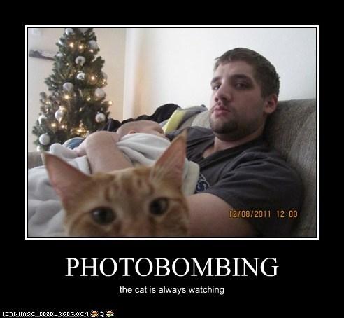 PHOTOBOMBING the cat is always watching