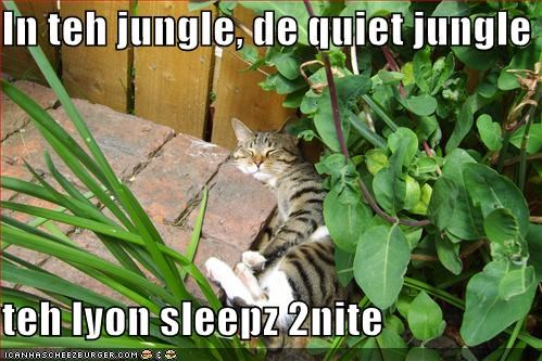 jungle,lolcats,Music,sleeping