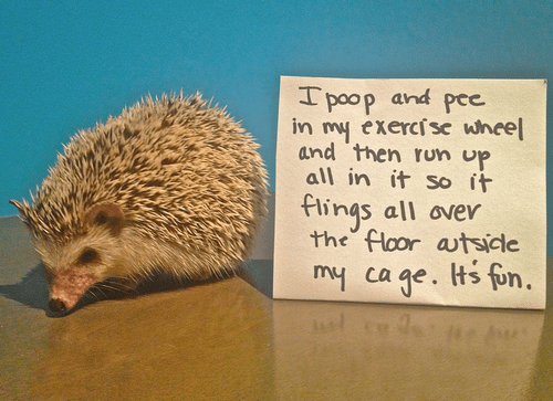 cute dog shaming hedgehogs funny hedgehogs funny - 5759237