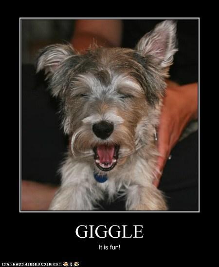 GIGGLE It is fun!