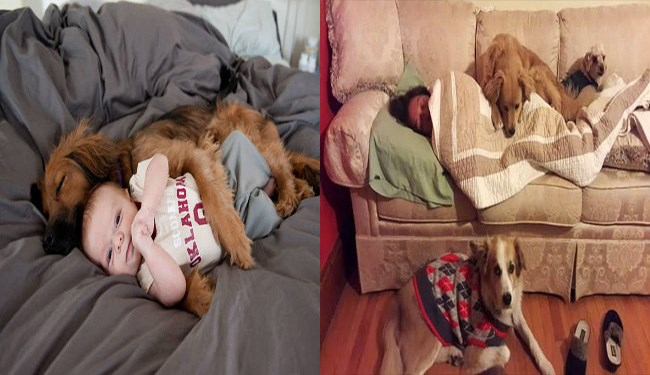 dogs snuggling babies and people