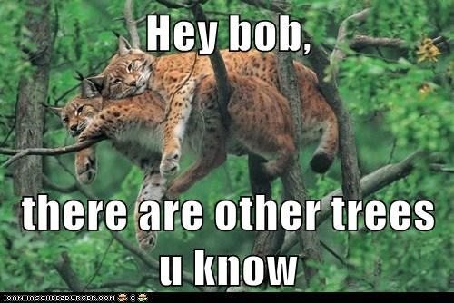 best of the week bob caption captioned Cats crowded fyi Hey limb lynx other trees