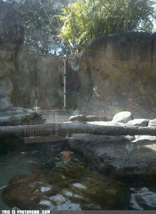 feeding time,i can tell the pixels,otter enclosure,reflection,shopped,when you see it