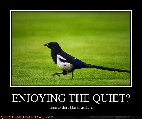hilarious,jerk,magpie,quiet