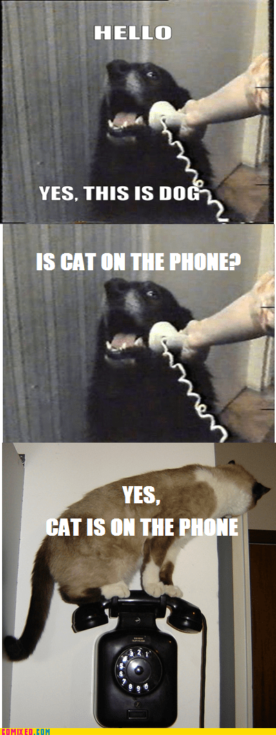 animals cat meme on the internets this is dog