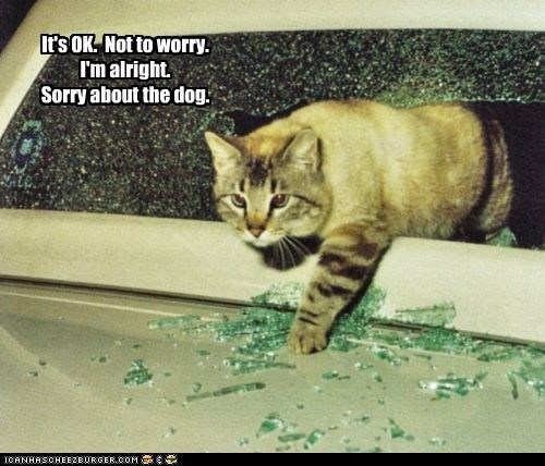 It's OK. Not to worry. I'm alright. Sorry about the dog.