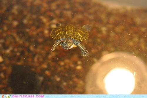 rescue swim tank turtle water - 5761998848