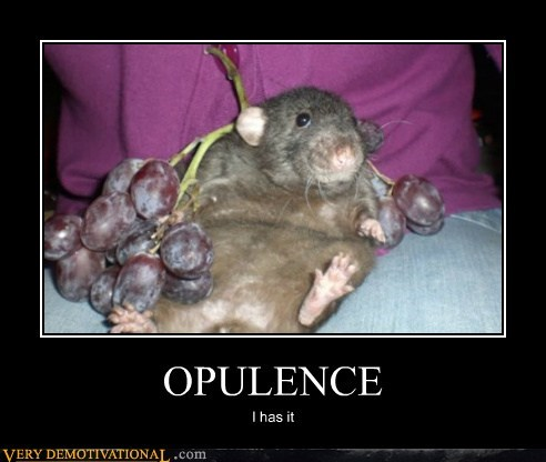 fat grapes hilarious mouse opulence wtf
