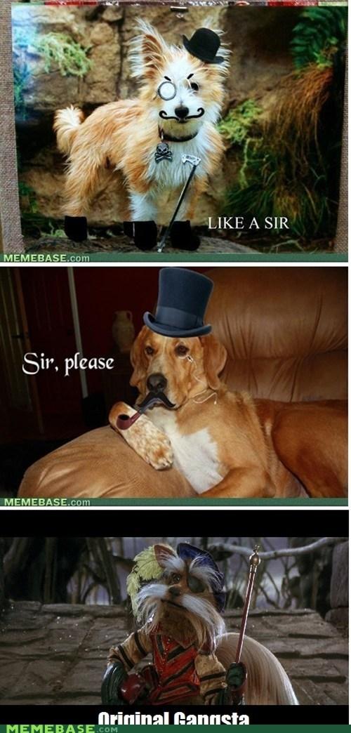 david-bowies-junk dogs gentlemen labyrinth sir - 5762812928