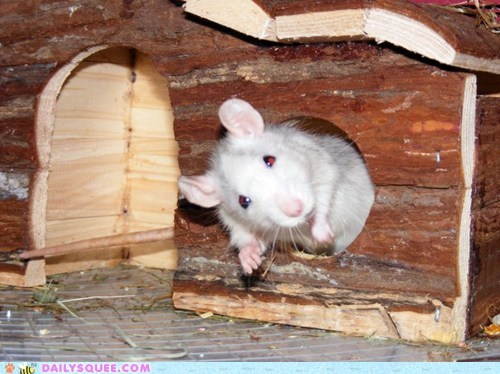 do want food fort looking question rat reader squees waiting - 5763685376