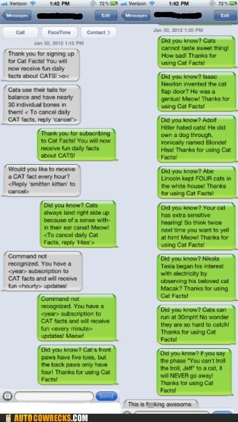 awesome cat facts cat lady Cats - 5763949568