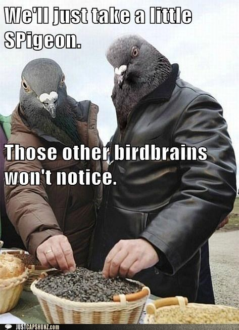 birdbrains caption contest farmers market pigeon - 5764069120