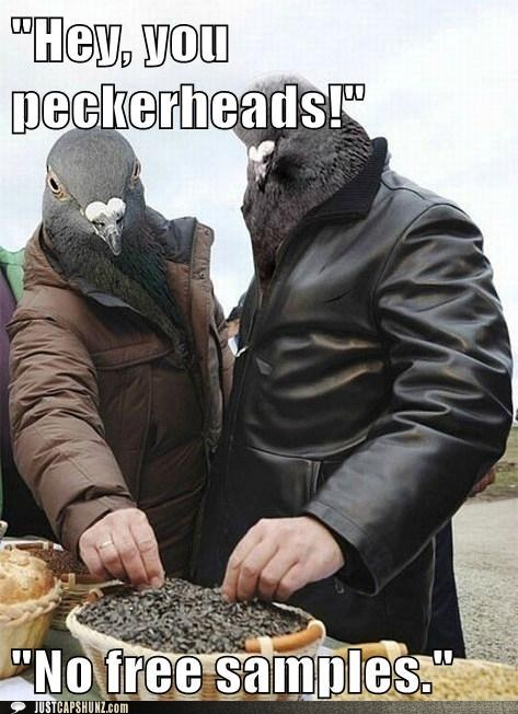 caption contest farmers market pigeon pigeons - 5764069632