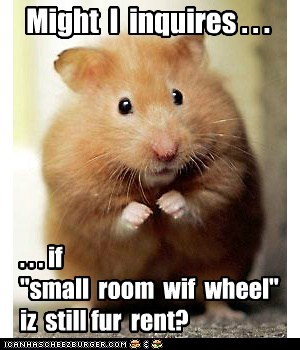hamster funny apartment - 5764094976