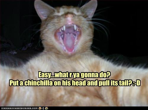 Easy...what r ya gonna do? Put a chinchilla on his head and pull its tail? :-D