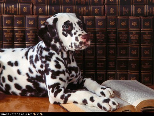 book,books,dalmatian,goggie ob teh week,library,scholar,smart