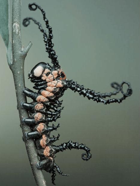 brahmin caterpillar-moth,science,Spider-Man,superheroes,Venom