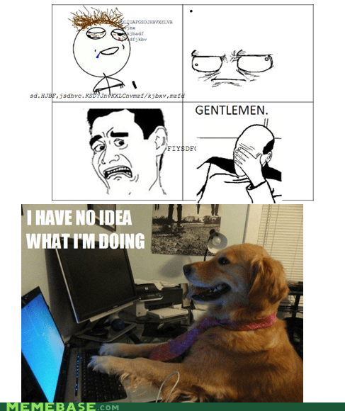 dogs doing idea Memes sense - 5764506624