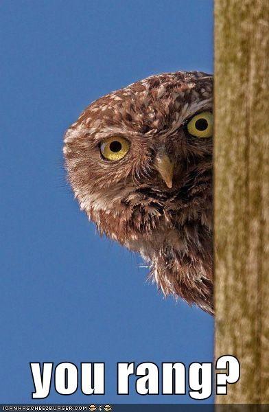 Owl - 5764677888