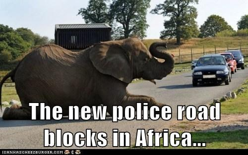 road blocks,elephants