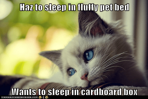 beds,boxes,cardboard box,Cats,complaining,first world cat problems,First World Problems,pet beds,whining