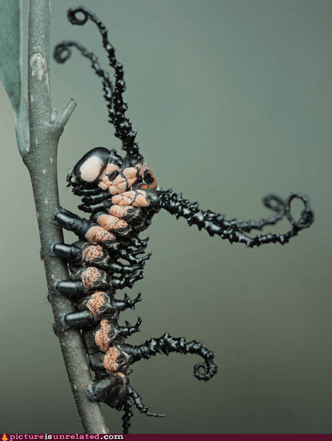 best of week caterpillar creepy insect Venom wtf - 5764970496