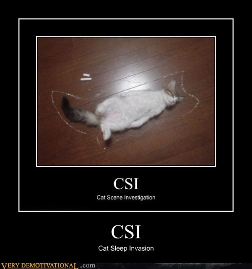 CSI Cat Sleep Invasion