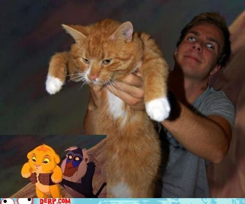 derp,lion king,simba