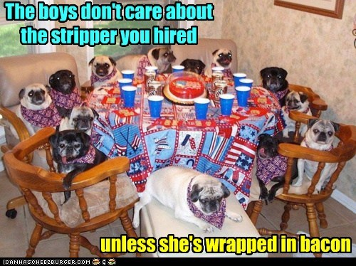 animals bacon dogs food i has a hotdog Party pugs strippers - 5765547264