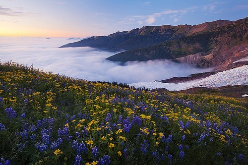 clouds,flowers,getaways,mount baker,mt-baker,north america,united states,washington,whatcom county,wildflowers