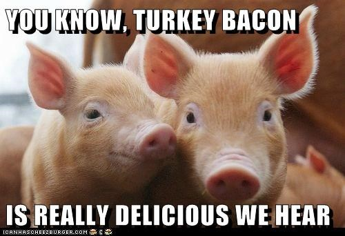animals,bacon,food,healthy,healthy lifestyle,noms,pig,turkey bacon