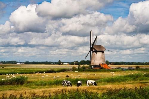 cows europe farm getaways Netherlands windmill - 5765835008