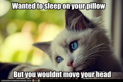 annoying,beds,Cats,complaining,first world cat problems,First World Problems,heads,pillows,whining