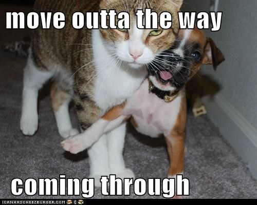 boxer,cat,move,move out of the way,nope,puppy,push